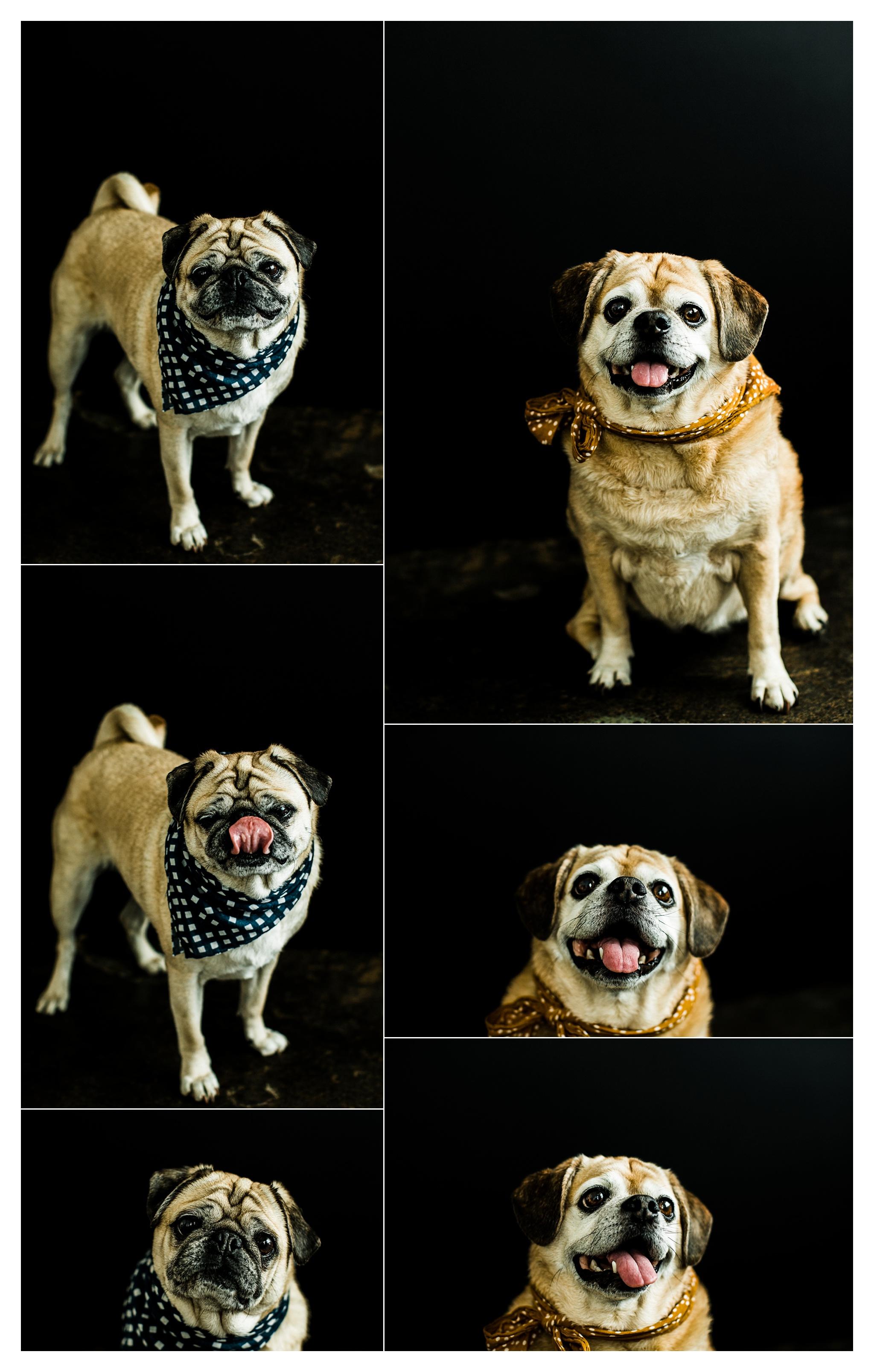 Pet Photography in Portland, Oregon Sommessa_2703.jpg