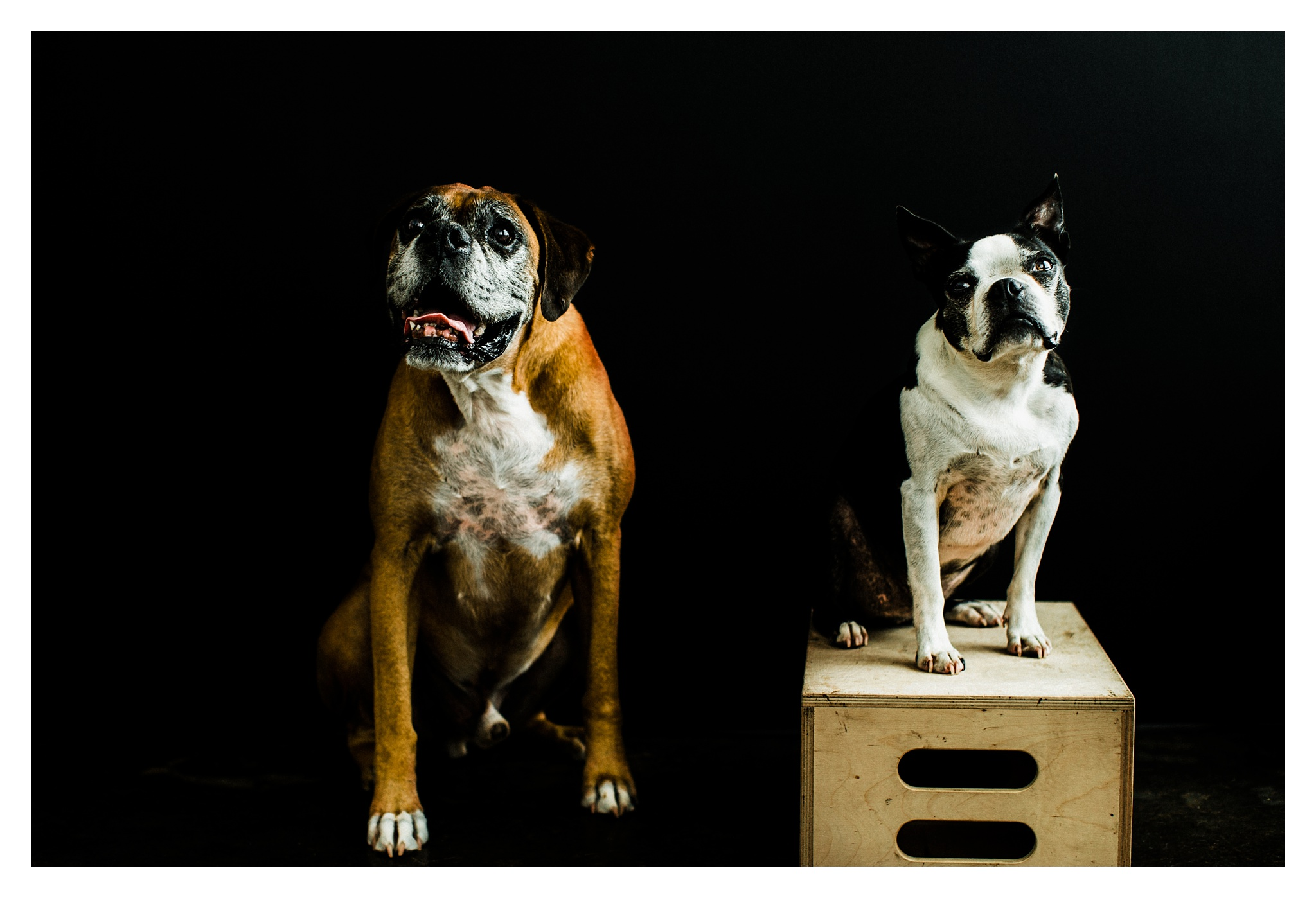 Pet Photography in Portland, Oregon Sommessa_2711.jpg