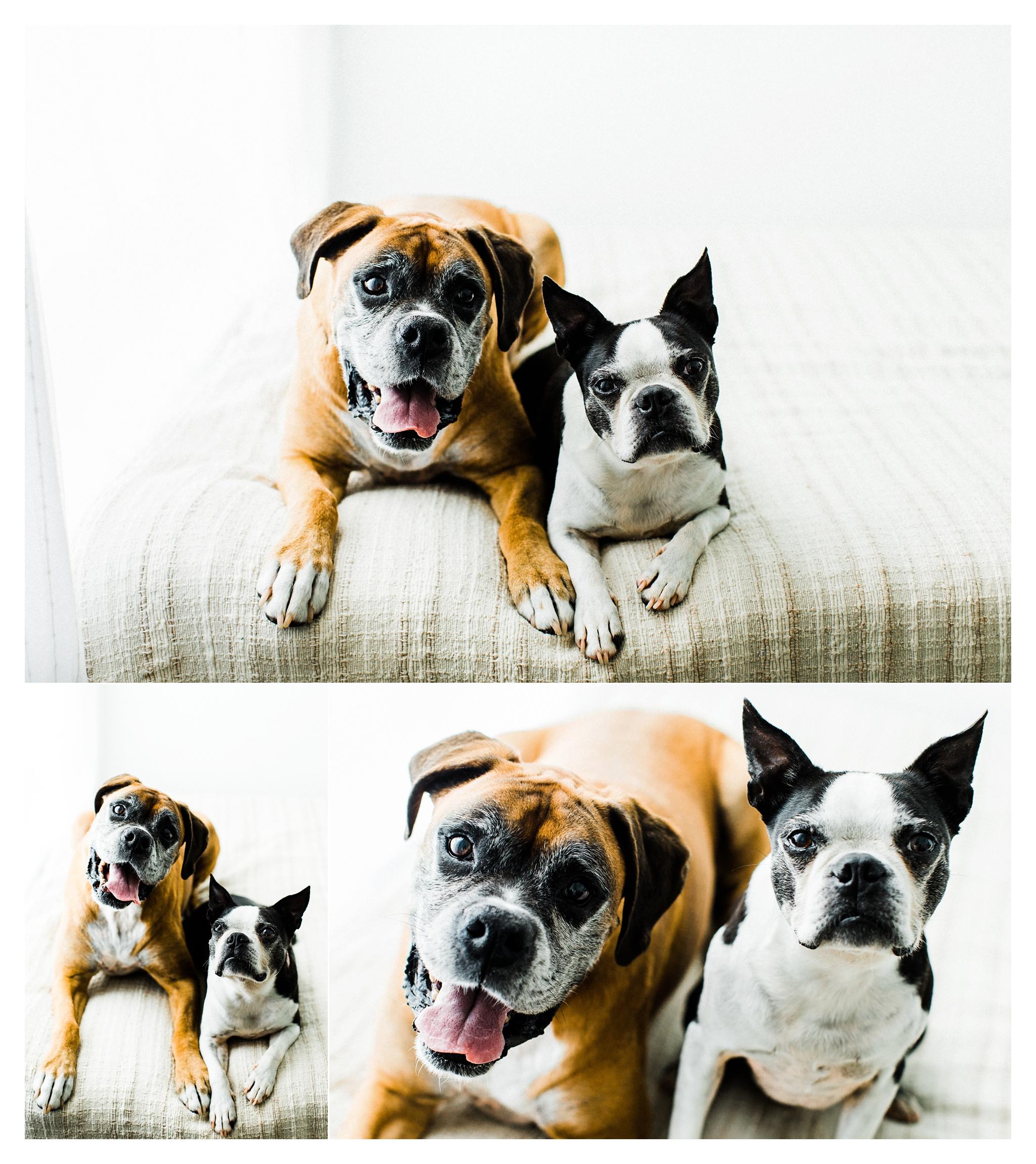 Pet Photography in Portland, Oregon Sommessa_2706.jpg