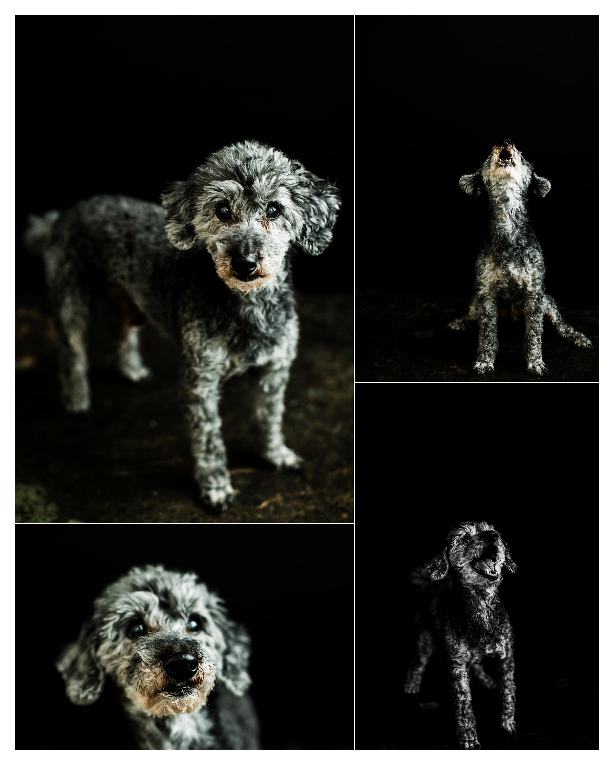 Pet Photography in Portland, Oregon Sommessa_2712.jpg