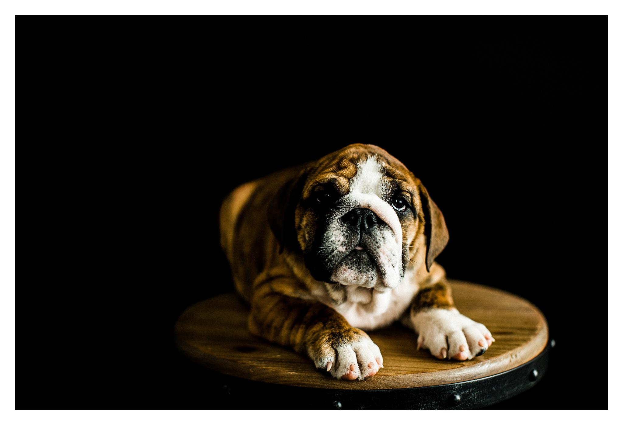 Pet Photography in Portland, Oregon Sommessa_2719.jpg
