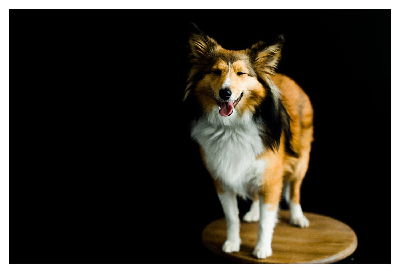 Pet_Photographer_Portland_Oregon_0003.jpg