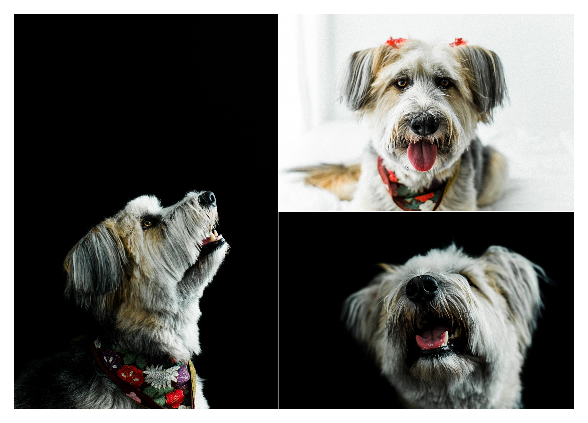 Pet Photography Portland, Oregon_3177.jpg