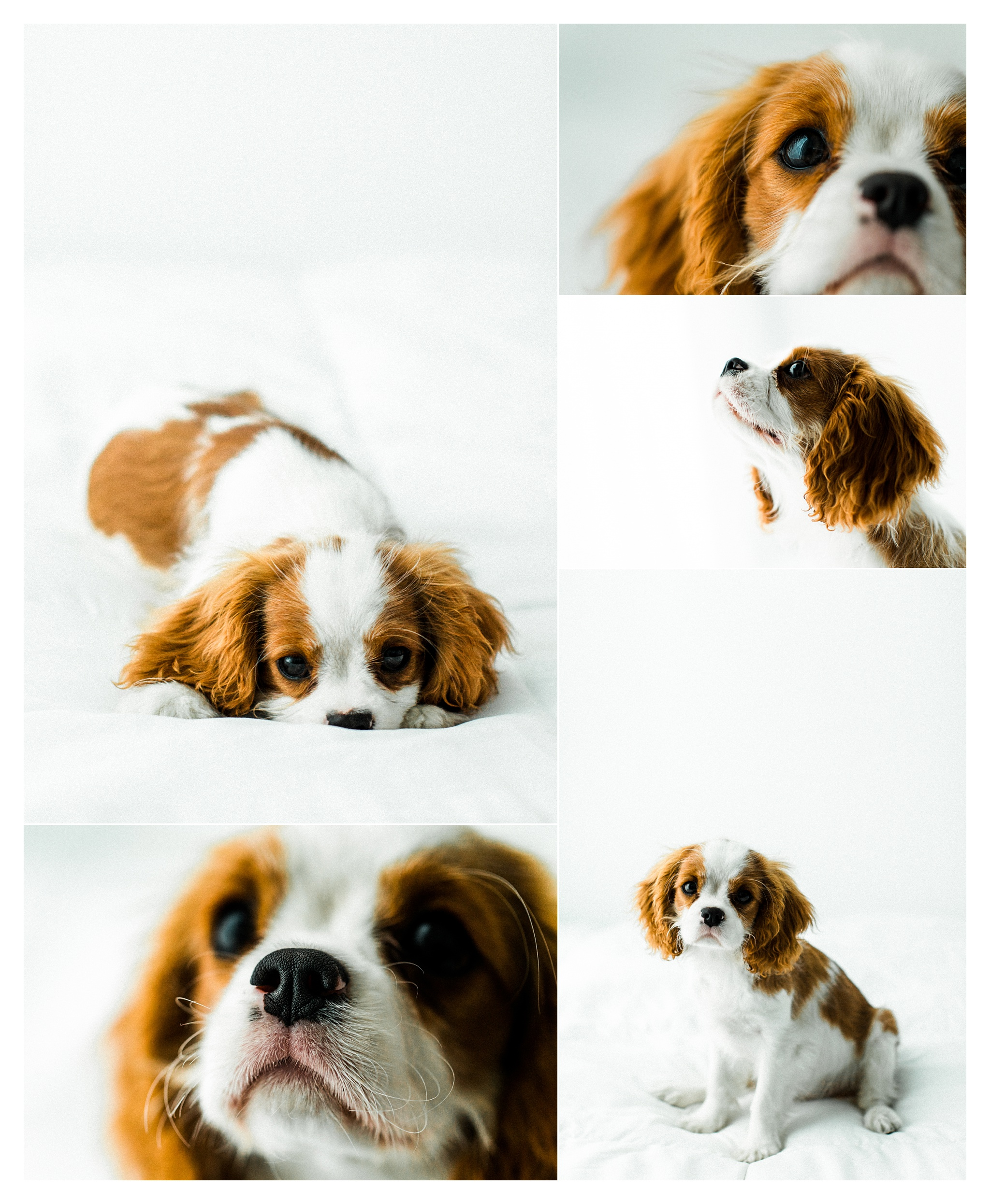 Pet Photography Portland, Oregon_3188.jpg