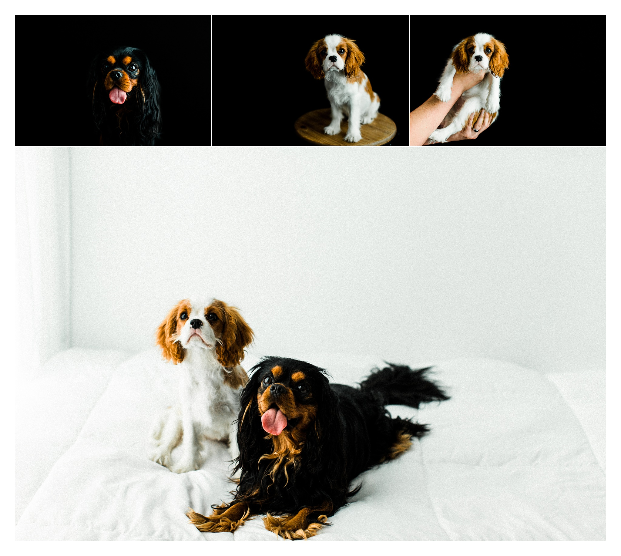 Pet Photography Portland, Oregon_3190.jpg
