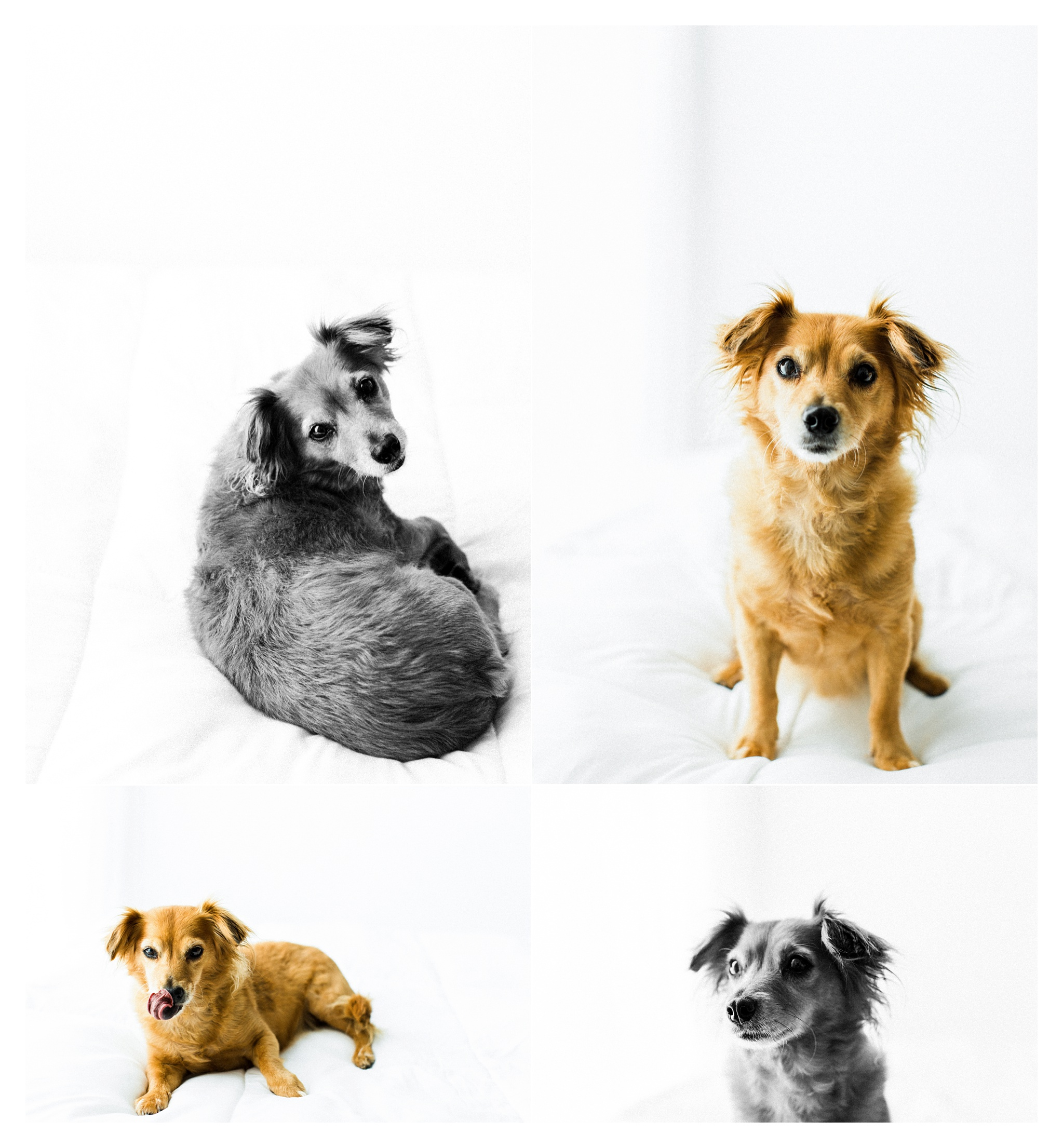Pet Photography Portland, Oregon_3273.jpg