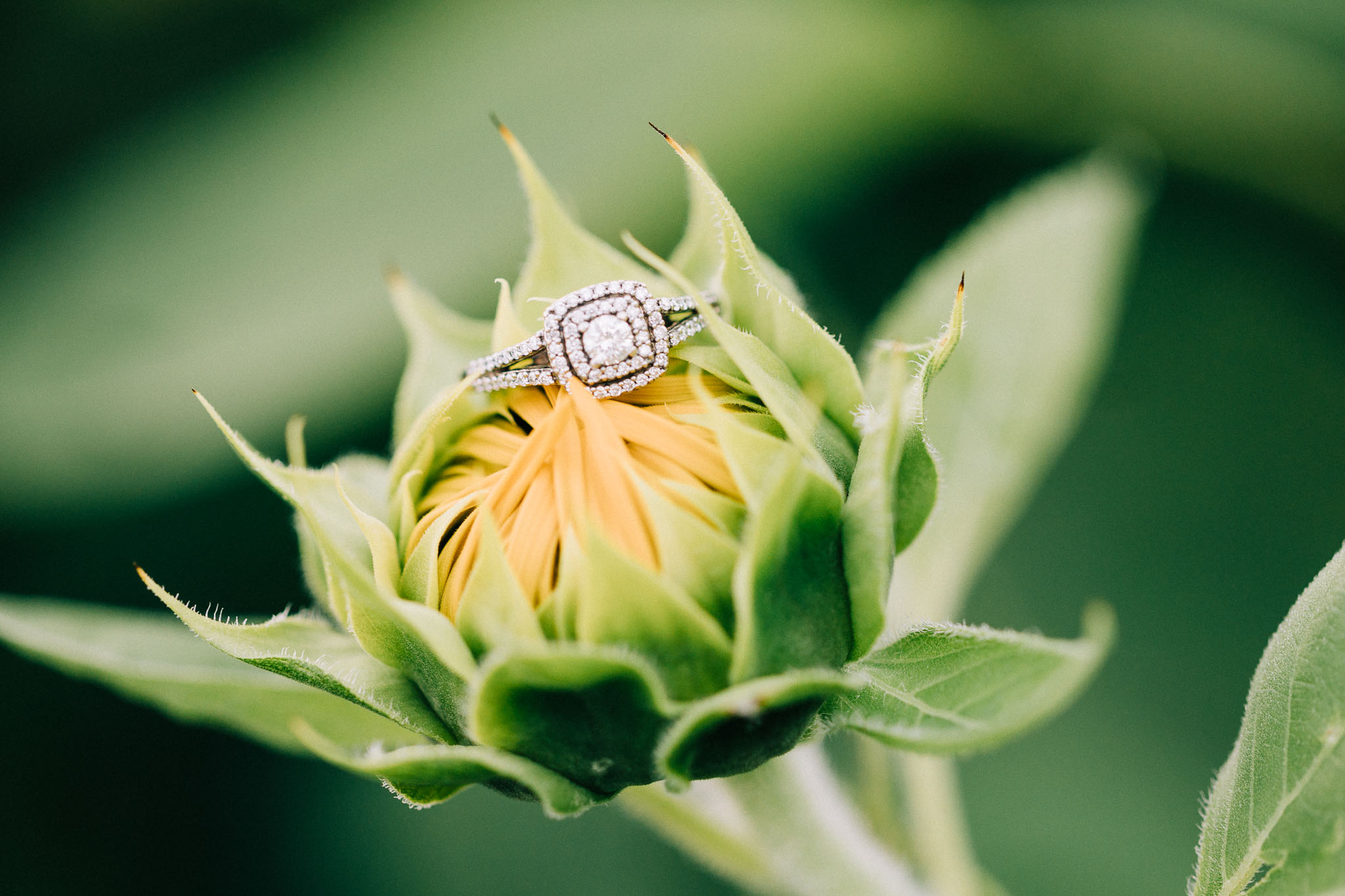 sunflower-engagement-session-5438.jpg