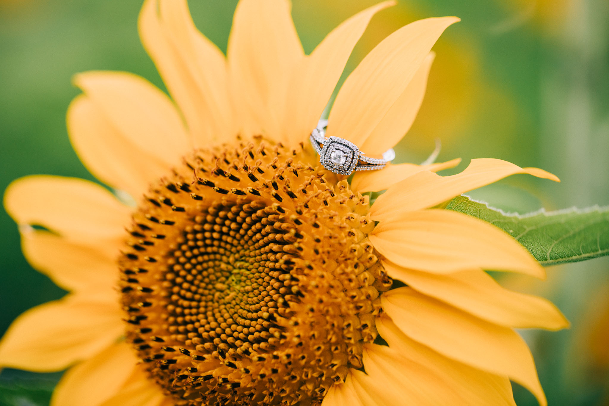 sunflower-engagement-session-5443.jpg