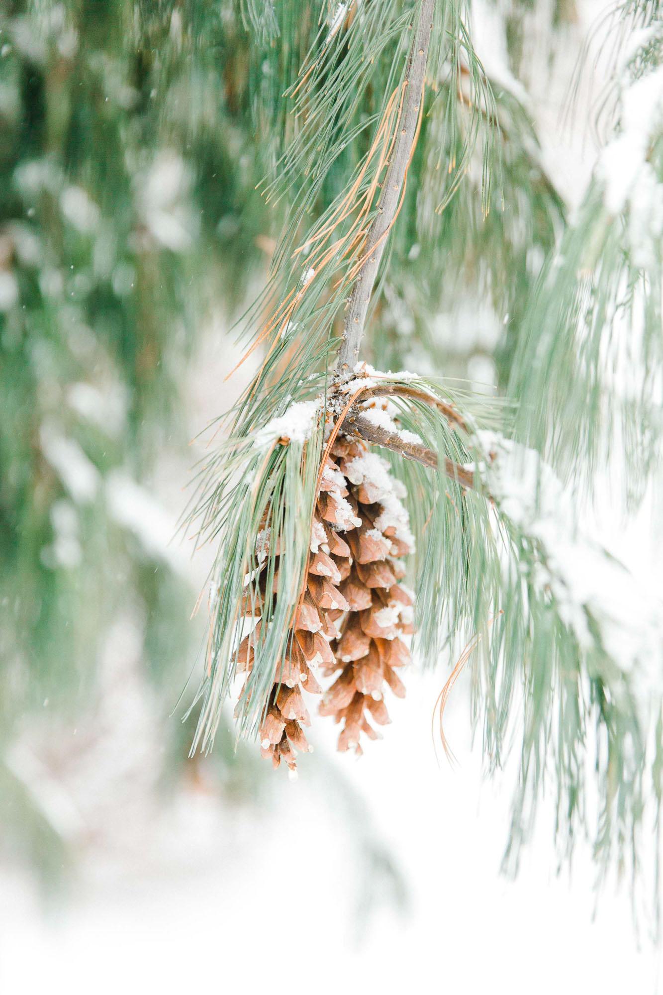 snowy-sand-springs-country-club-drums-pa-christmas-wedding-34438.jpg