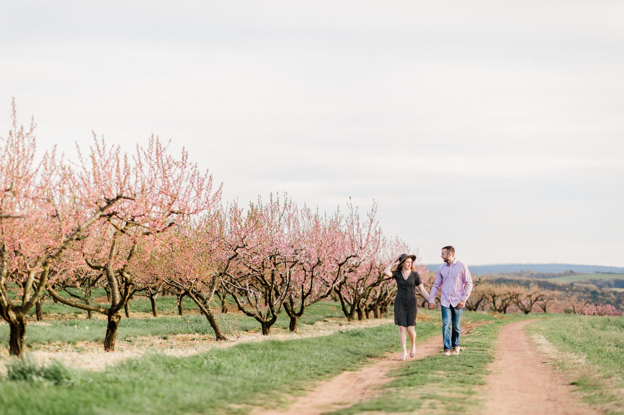 Rohrbachs-Spring-cherry-blossom-engagement-7414.jpg
