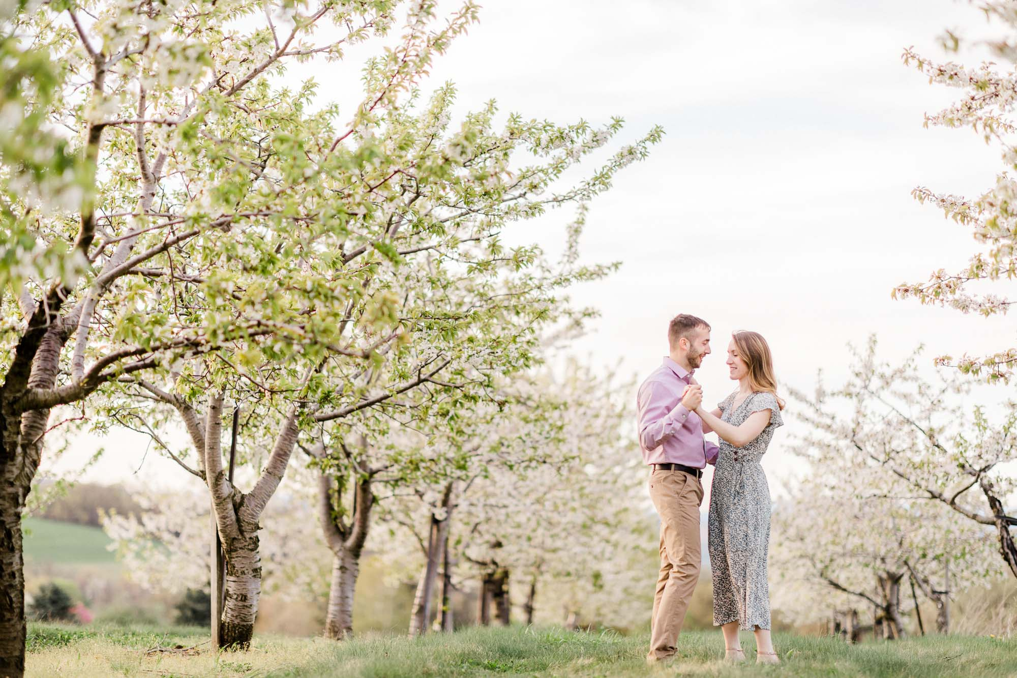 Rohrbachs-Spring-cherry-blossom-engagement-7647.jpg