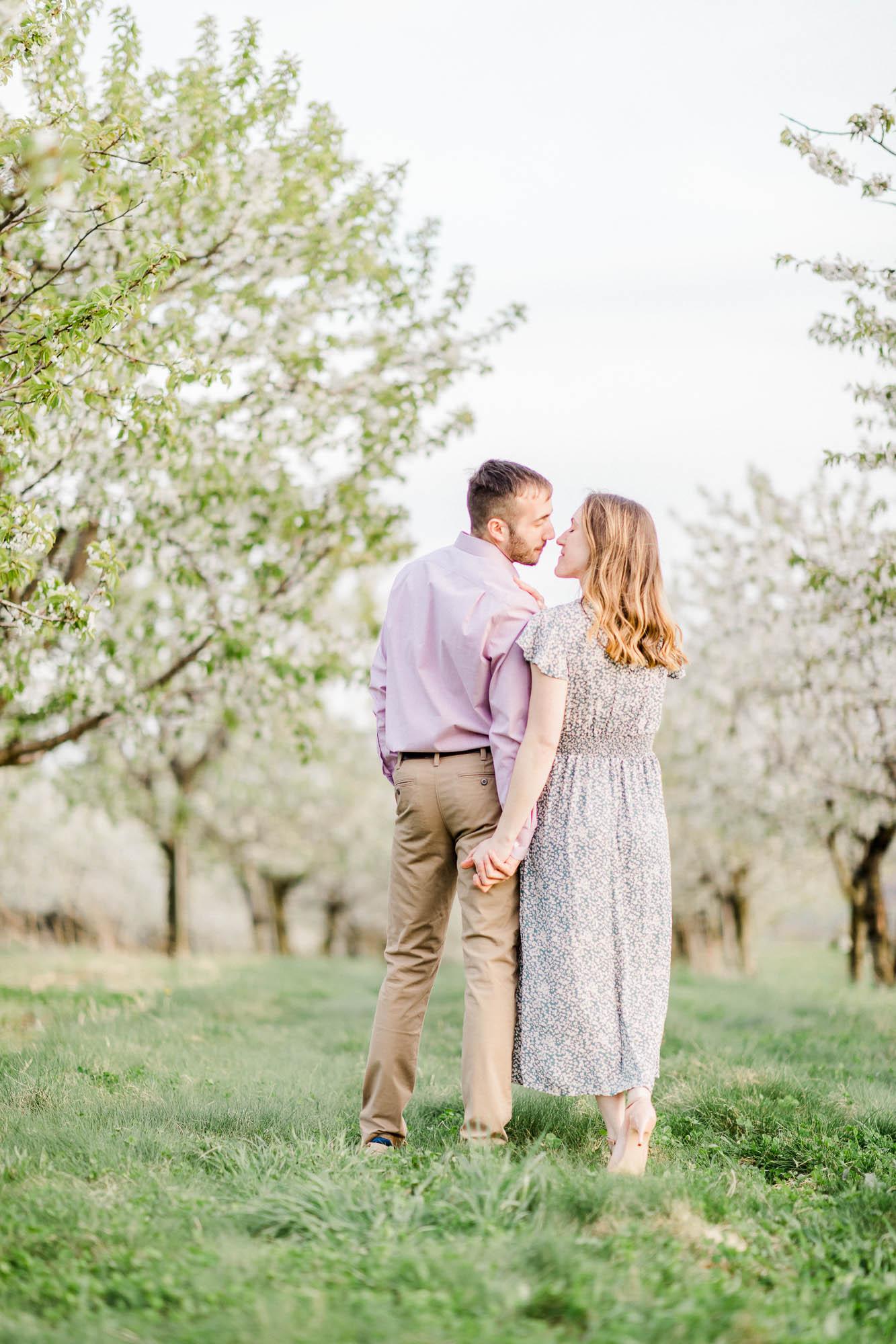 Rohrbachs-Spring-cherry-blossom-engagement-7738.jpg