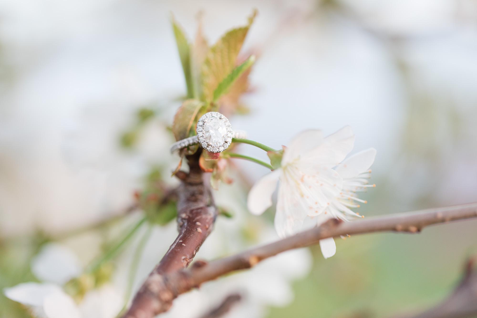 Rohrbachs-Spring-cherry-blossom-engagement-7892.jpg