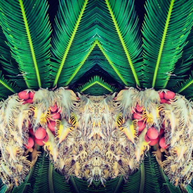 Nature Series 7.jpg