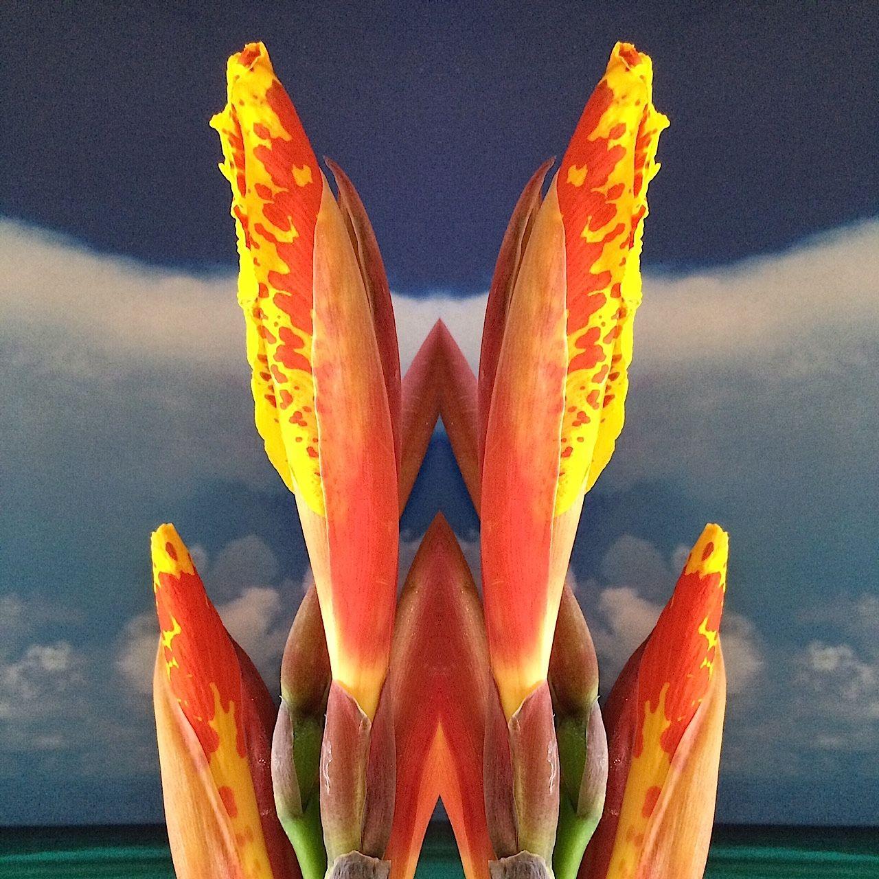 Nature-Series-4.jpg