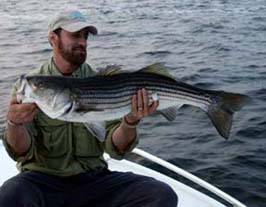 Striper caught Narragansett Bay at Newport.