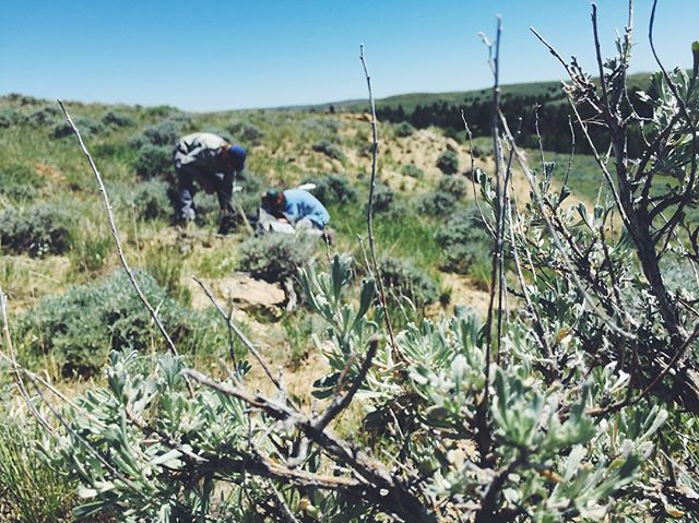 The Sams sampled among the sage and cacti. Can't beat those views! 🌵  Sophie and Matt swam through waste high grasses and climbed up and down ridges to tackle their sample points. 🌾