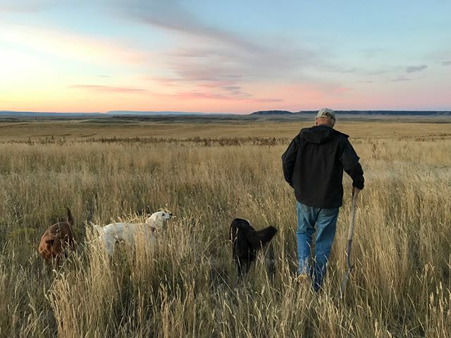 Farmer, rancher, entrepreneur John Brown of Shepherd, MT never heads out without his shovel to check out soil development, root growth, and biological activity. Whether it's searching for dung beetles in cow pies or working with Quick Carbon staff scanning soils for carbon content, it's always a pleasure to investigate and scheme with John! #quickcarbon #uhpsi #montana #soilscience #alwaysbringashovel