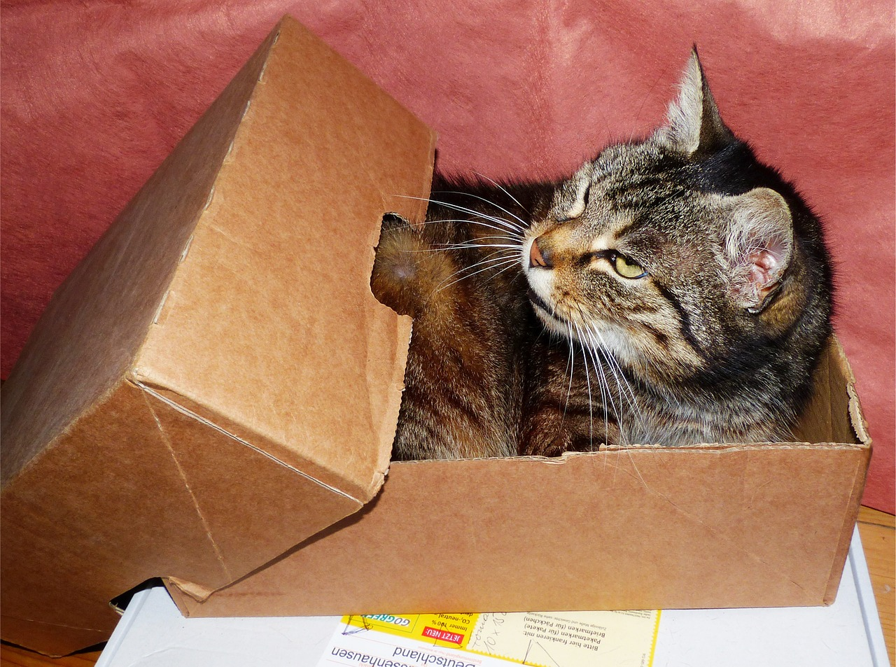 cat-1529520_1280moving.jpg