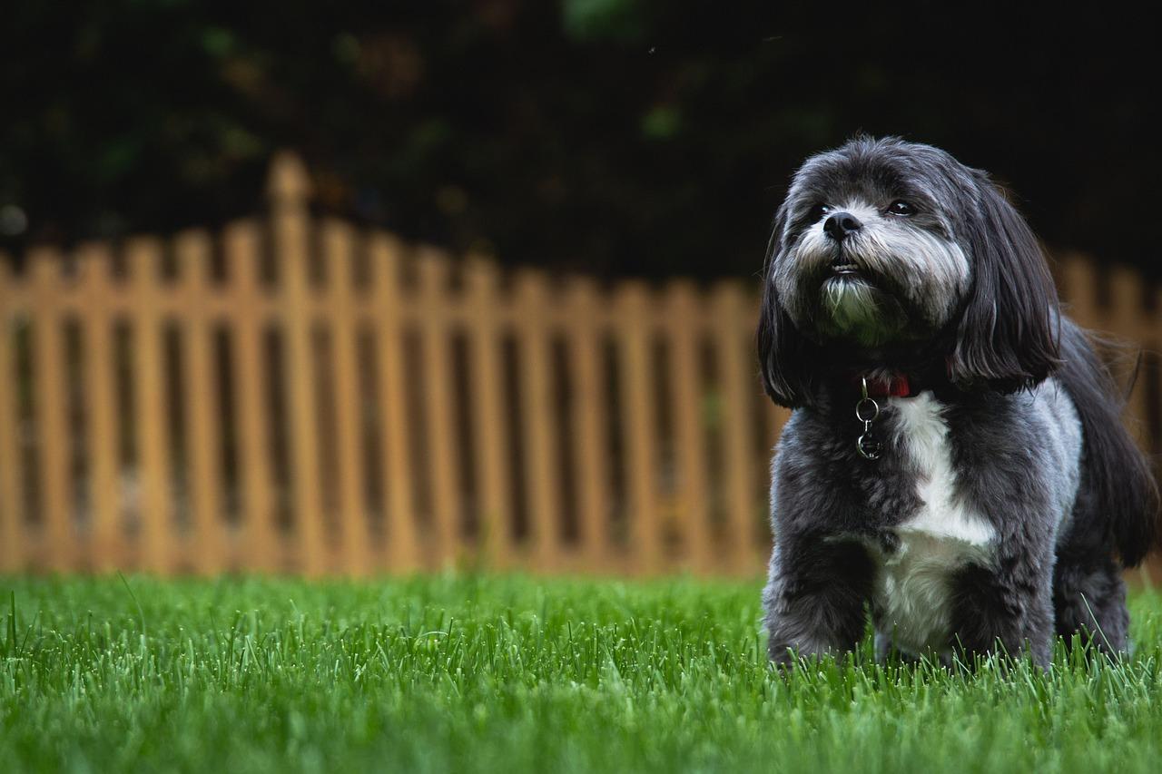 dog-932447_1280in backyard.jpg