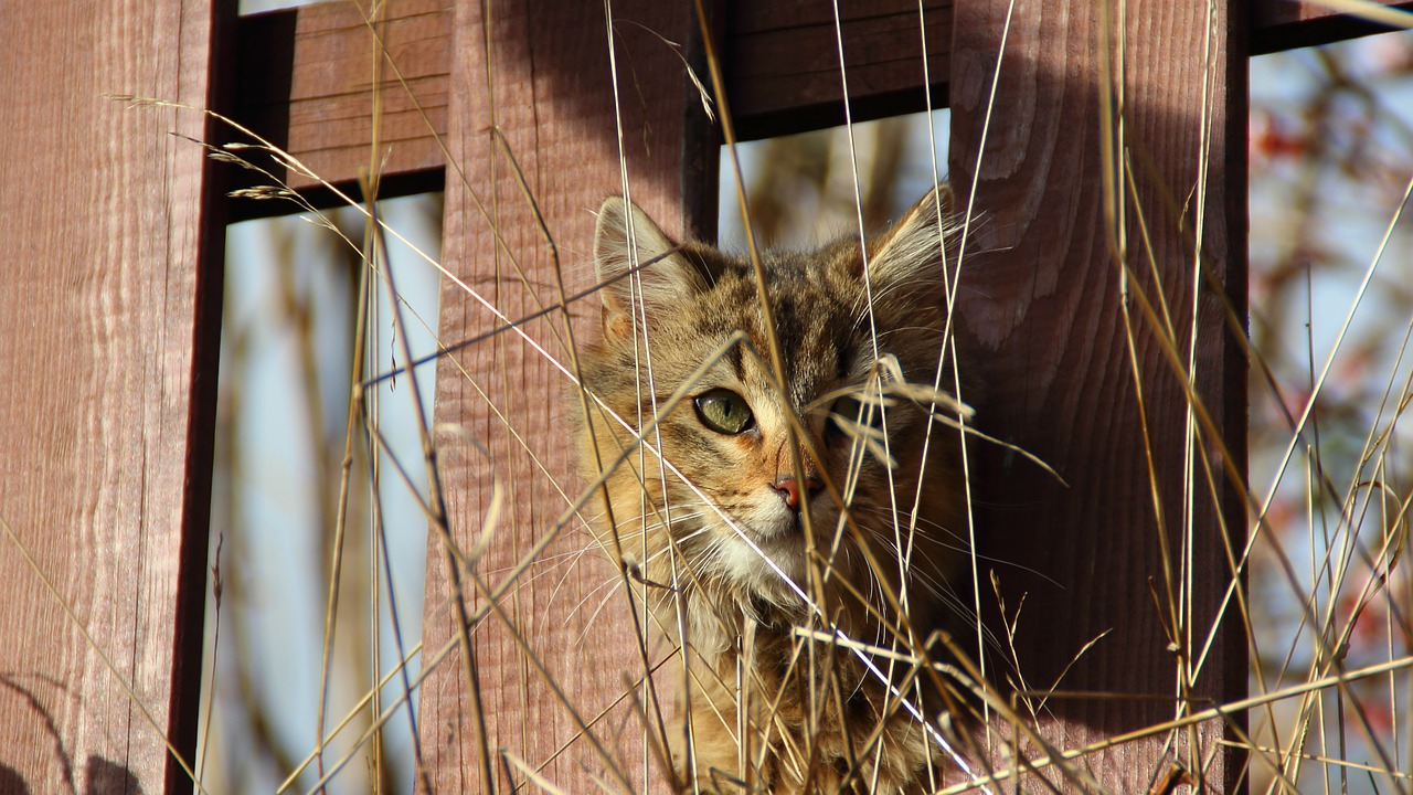 cat-239353_1280fence.jpg