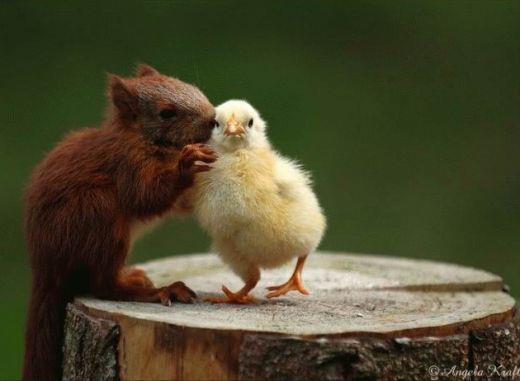squirell duck.jpg