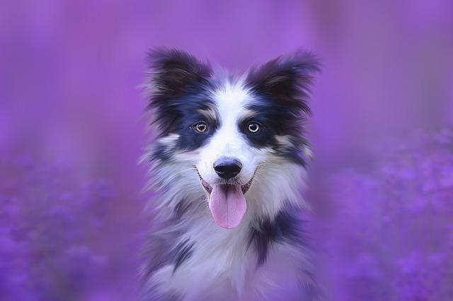 dog-3545002_640.jpg