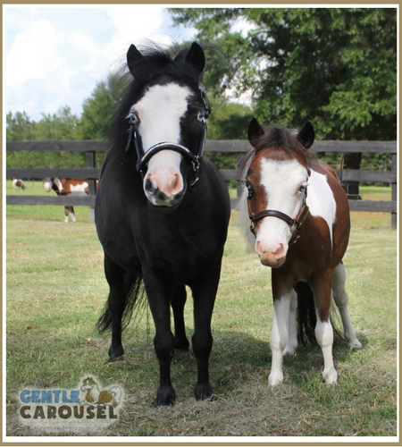 therapy-horse-magic-scout-gentle-carousel-hero-farm-450x500.jpg