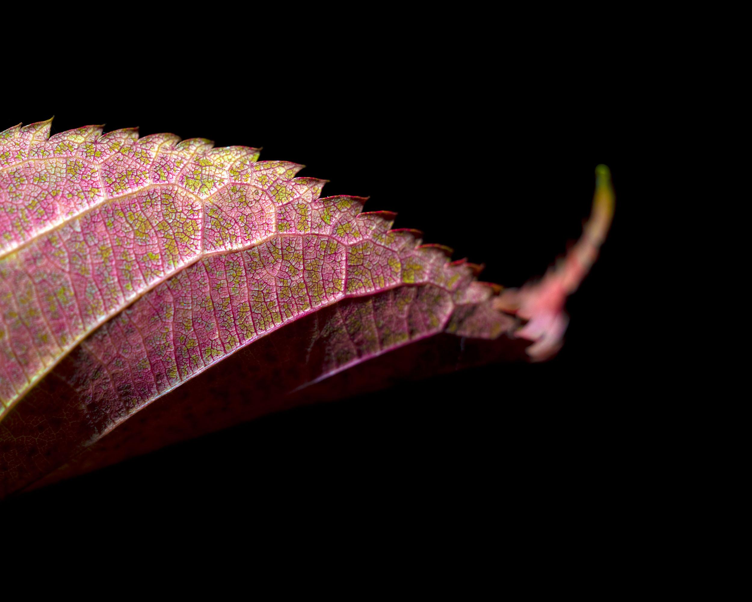 www.iaincrockart.com_flora-CF001768-2.jpg