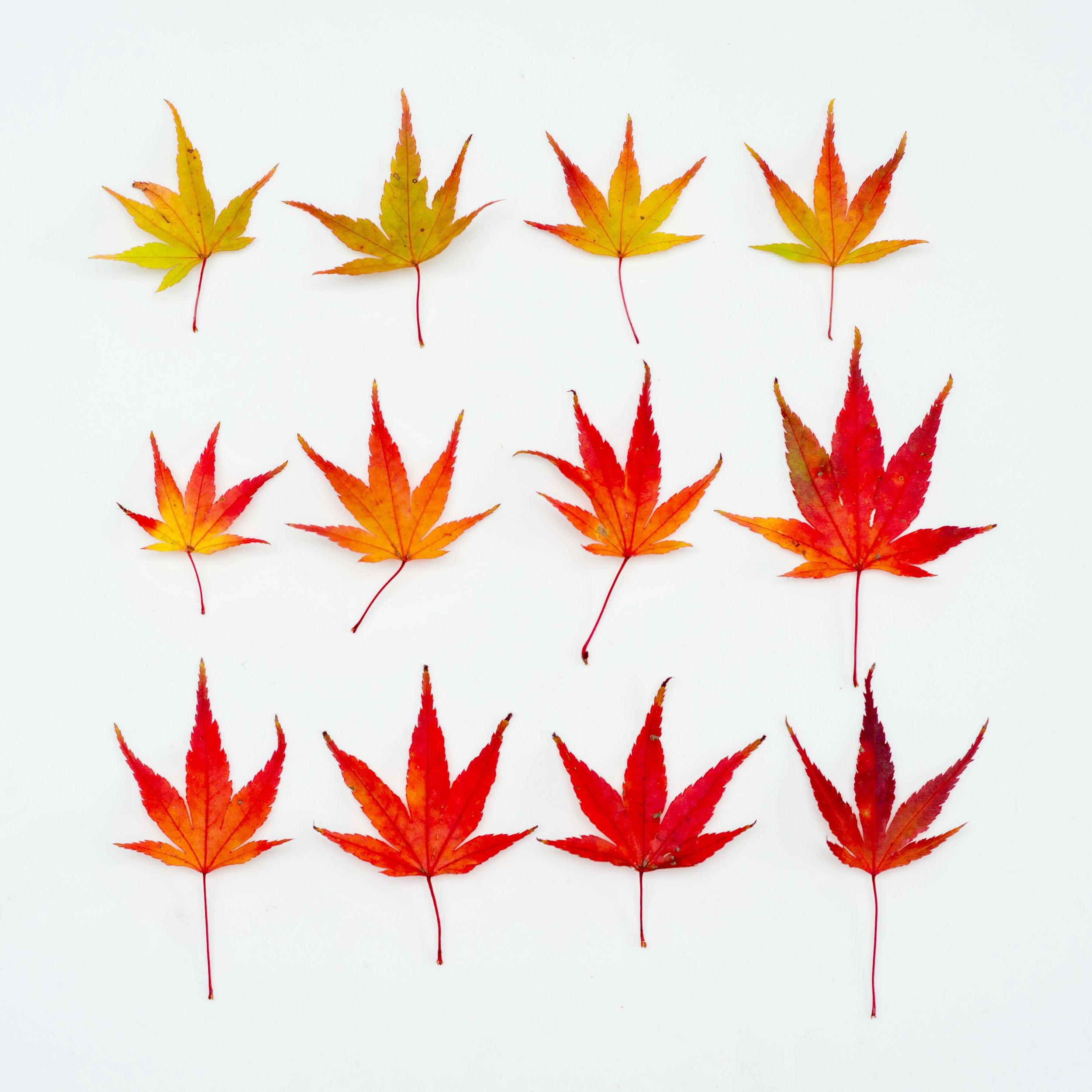 www.iaincrockart.com_flora-2673.jpg