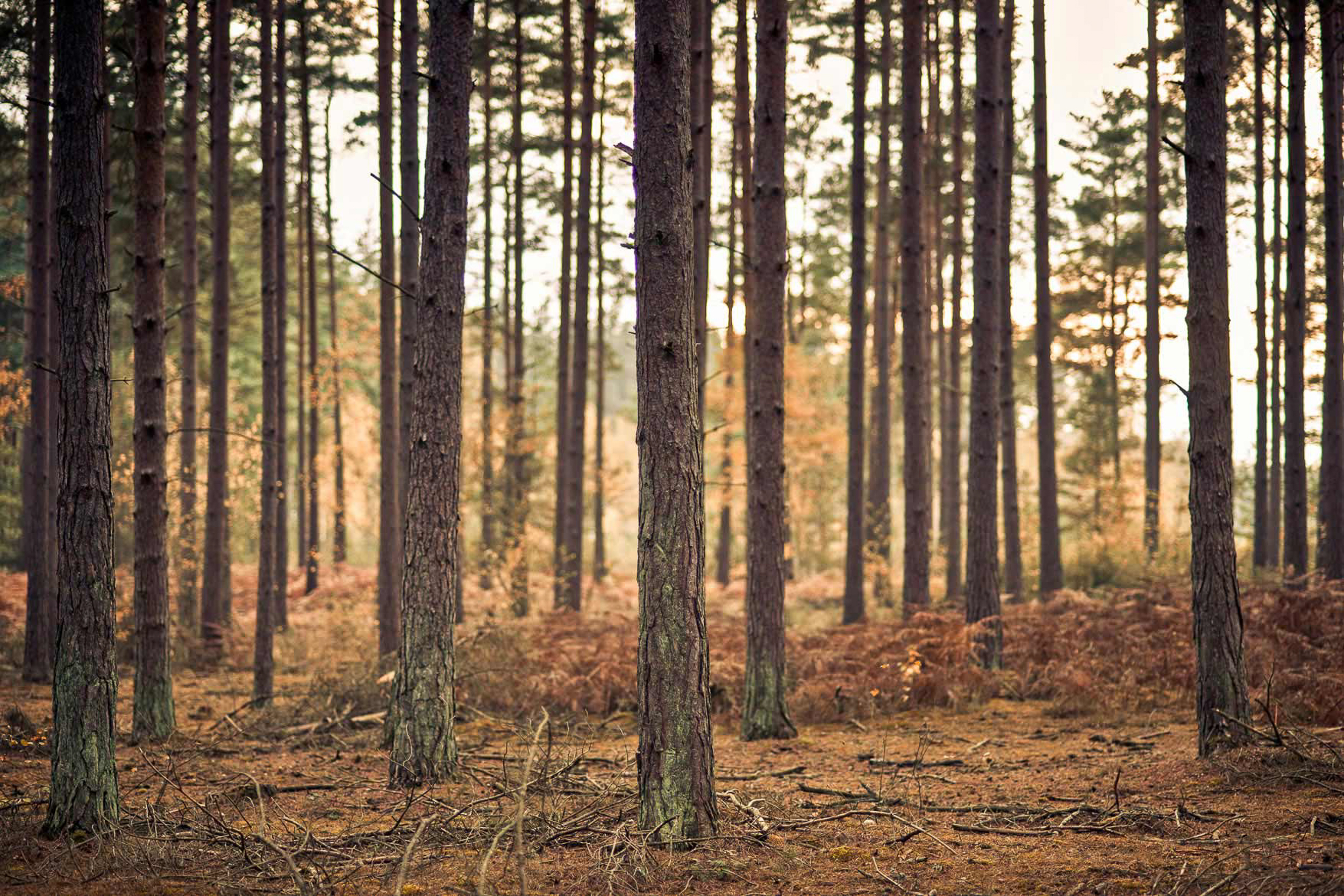 www.iaincrockart.com_landscape-Iain-Crockart-Woodland.jpg