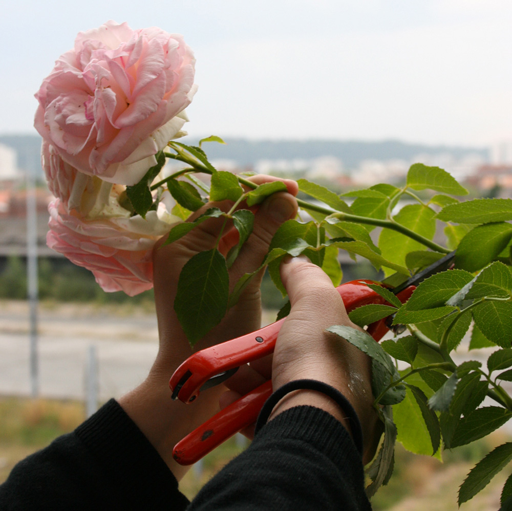 roseraie.jpg