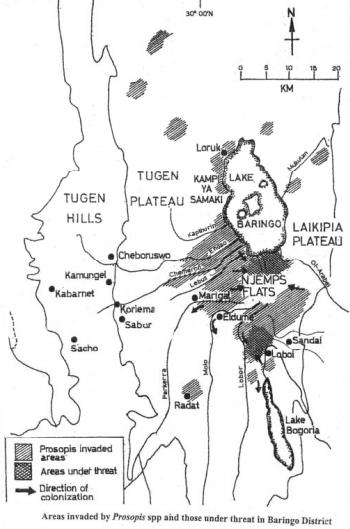 Prosopis invasion, Baringo county, Kenya   Source: Choge et al, 2002