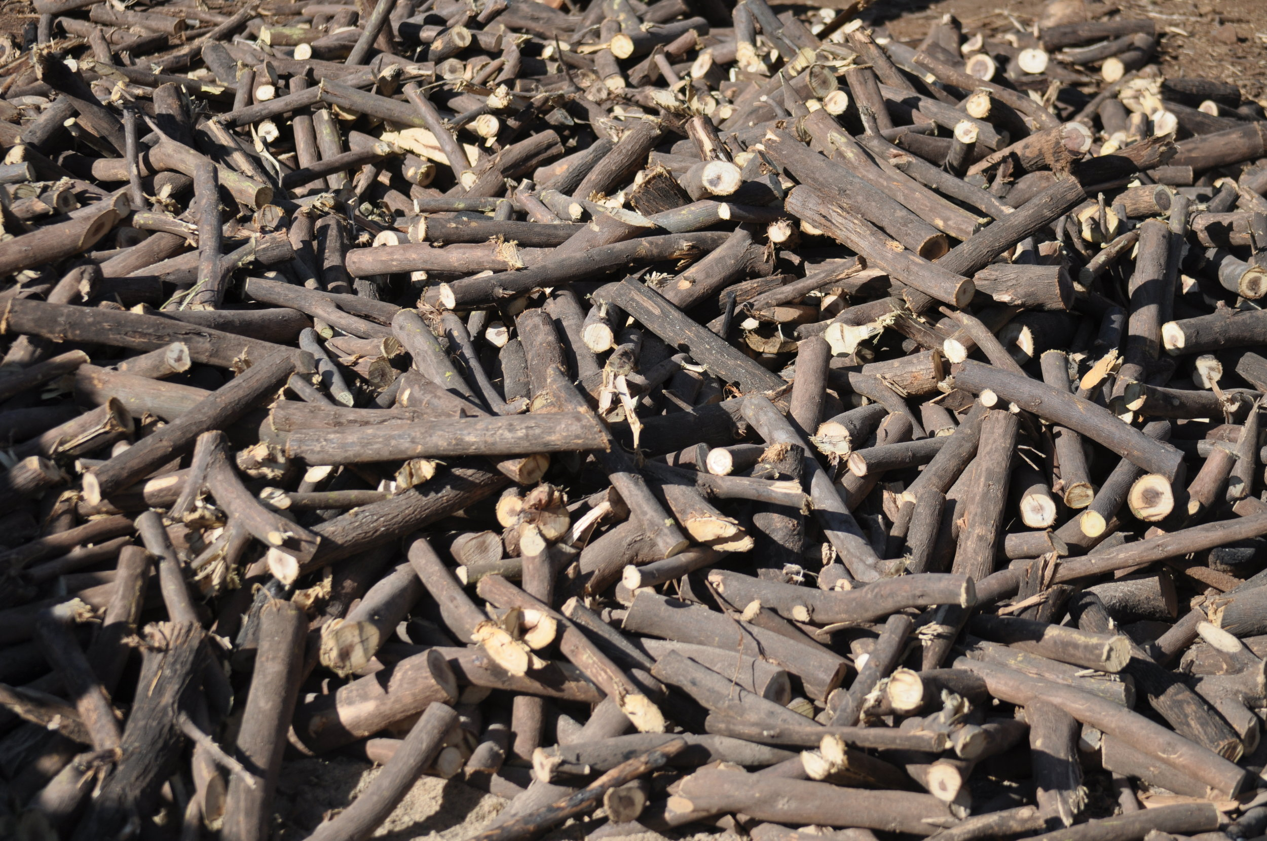 Collected prosopis wood, Kenya