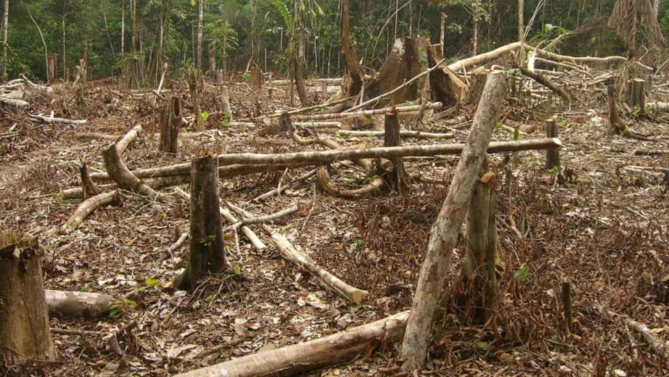Deforestation as a result of unsustainable charcoal production