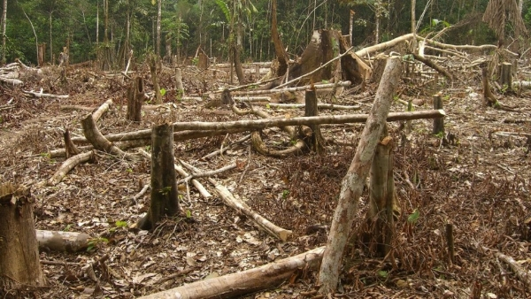 Deforestation as a result of traditional charcoal production