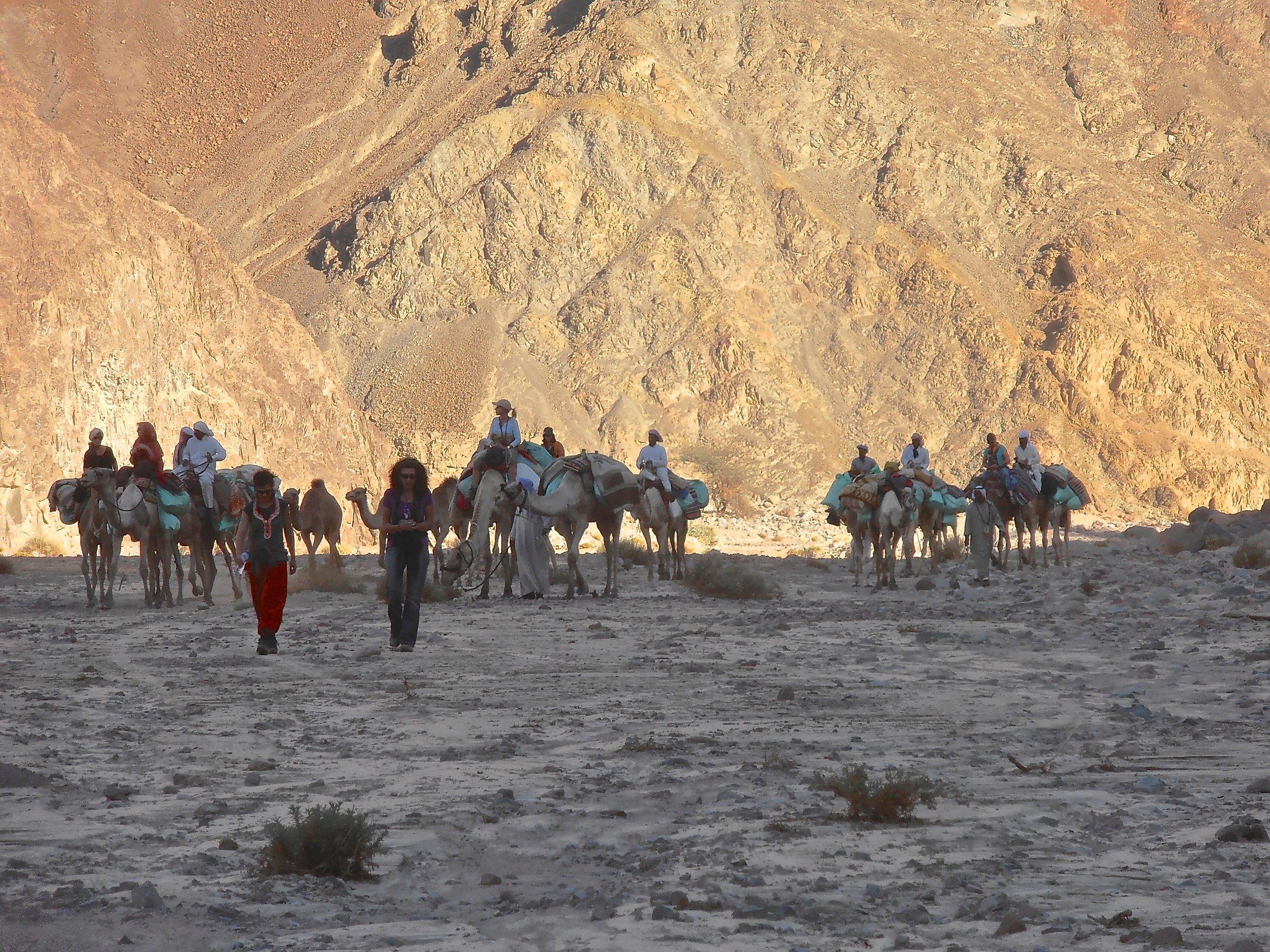 - Stichting Dalèl zet zich in voor het voortbestaan van de bedoeïen en de kameel.