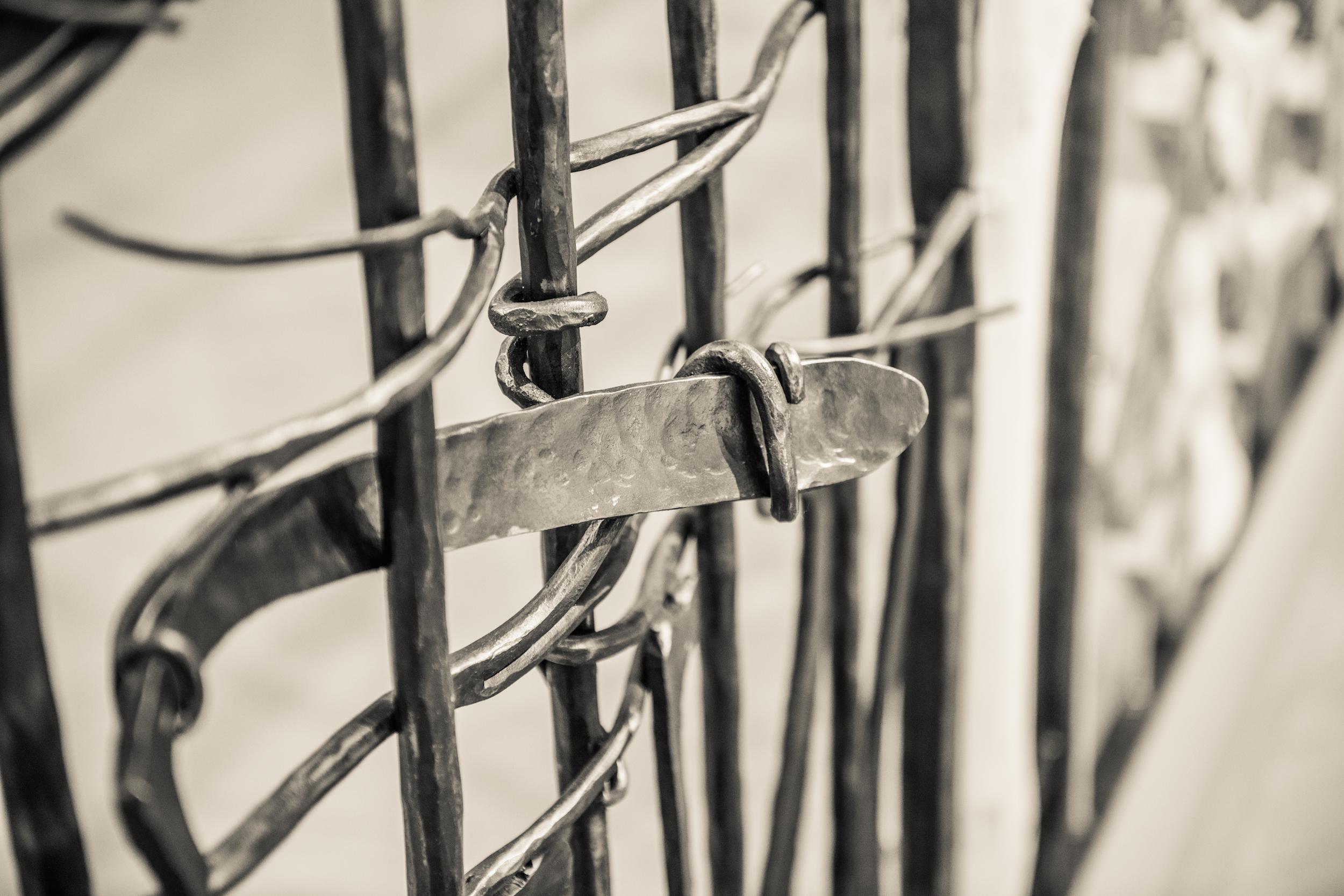 Fencelines1.jpeg