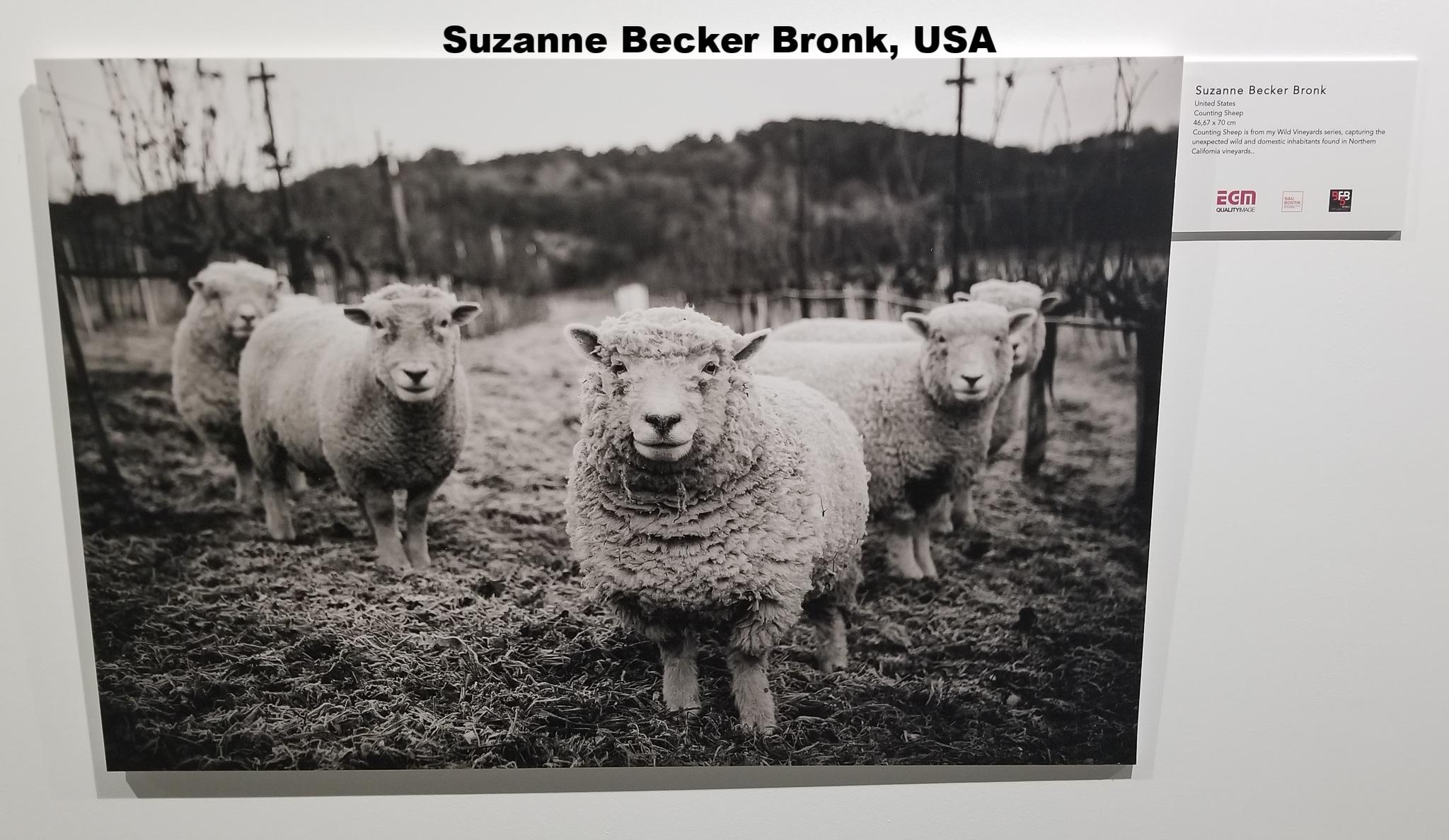 Suzanne Becker Bronk, United States