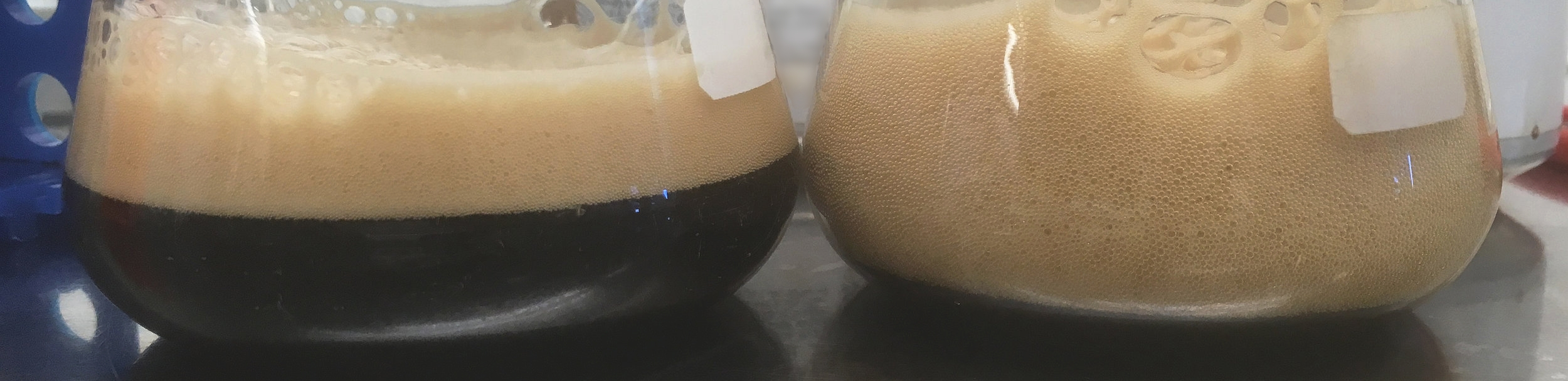 Two samples of the same beer.Sample on the left not demonstrating the symptoms of a  diastaticus  contamination, versus the one on the right which most definitely is. Both packaged and stored identically, and opened a minute apart.
