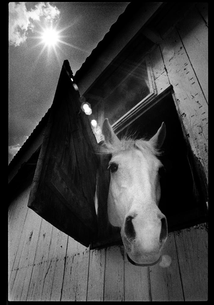 20180122-TC-Archive-Horse_and_sunburst-1980-001.jpg