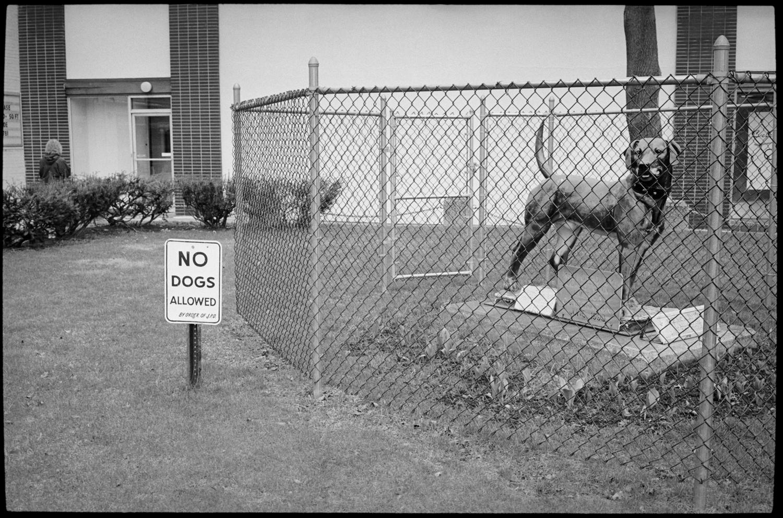 20180209-TC-Archive-No_Dogs-001.jpg