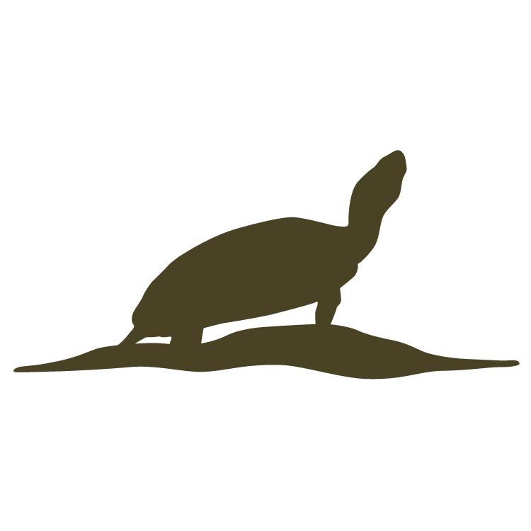 3.Turtle-01.jpg