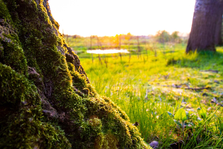 Saw Sunset Glow - Quote uit 'In Flanders Fields the poppies grow'John Mc RaePalingbeek - Zillebeke