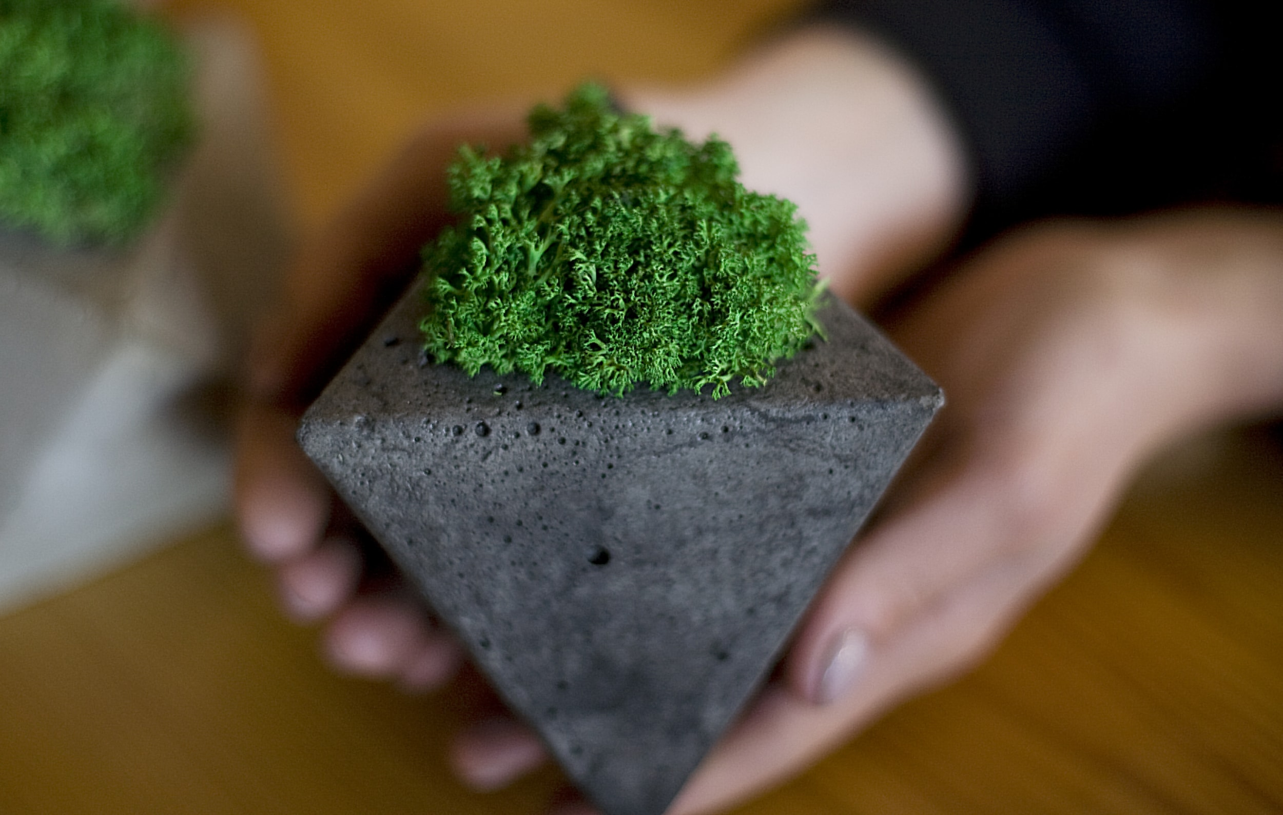 concrete-pot-moss.jpg