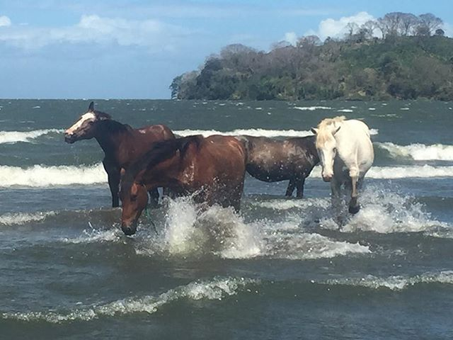 Ometepe Island in Nicaragua! :: An island filled with magic in so many different places! :: The island is filled with wild horses and when I was walking the beach they gallop right in front of me to the water to play! :: I was shocked because I was the only one there (for like a minute) :: But that minute was so special to me. :: These horses were so cool and taught me right then and there not to live in my mind so much that beauty is all around and to experience life. :: We ask for the things we want but many are afraid to experience life once the opportunity presents itself. :: 2019 is the year of actually experiencing everything that I want and I hope that this post helps you to experience everything you want in life. :: As always, keep going. :: Photography by @Natasha_Gisela :: #businesscoach #branddevelopment #businessdevelopment #womeninbusiness #socialmediamarketing #marketingconsultant #boutiquebusiness #luxurylifestyle #upscale #happyhealthywhole #positivemind #businesstips #coachingtips #creativebusinessowner #travel #instagramstrategy #businessmarketing #sustainablebusiness #ecobusiness #ecobrands #sustainablebrands #brandswithpurpose #sociallycultured007 #SharkTank
