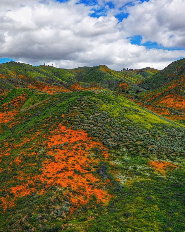 Record rainfalls in California this year have brought some incredible wildflowers to life along the I-15 corridor through Lake Elsinore! Having lived in SoCal all my life, I've never seen the hills this colorful! | #walkercanyon ⠀⠀⠀⠀⠀⠀⠀⠀⠀ ⠀⠀⠀⠀⠀⠀⠀⠀⠀ ⠀⠀⠀⠀⠀⠀⠀⠀⠀ ⠀⠀⠀⠀⠀⠀⠀⠀⠀ ⠀⠀⠀⠀⠀⠀⠀⠀⠀ ⠀⠀⠀⠀⠀⠀⠀⠀⠀ ⠀⠀⠀⠀⠀⠀⠀⠀⠀ #artofvisuals #lakeelsinore #droneporn #poppyfields #poppy #creativephotography #riversidecounty #shotondji #dji_official #flowerpower #droneoftheday #natgeohub #natgeoyourshot #createcommune #dronesaregood #hsdailyfeature #dronesdaily #amazing_shots #nbcla #awakethesoul #wildflower #fromwhereidrone #dronegear #discoverearth #djimavicpro #dji_photos #abc7eyewitness #topdown #djiglobal