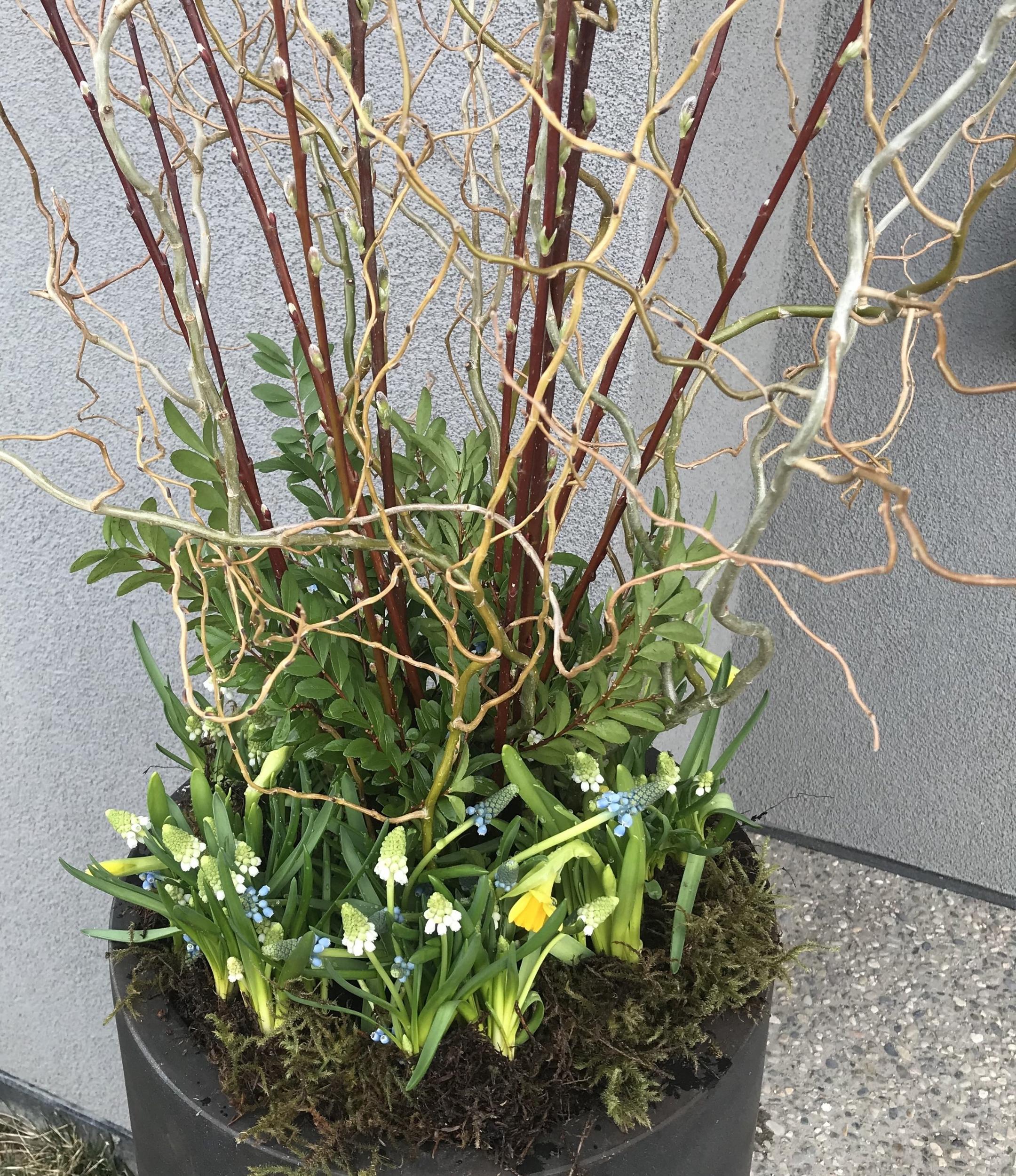 spring pot 4.jpg