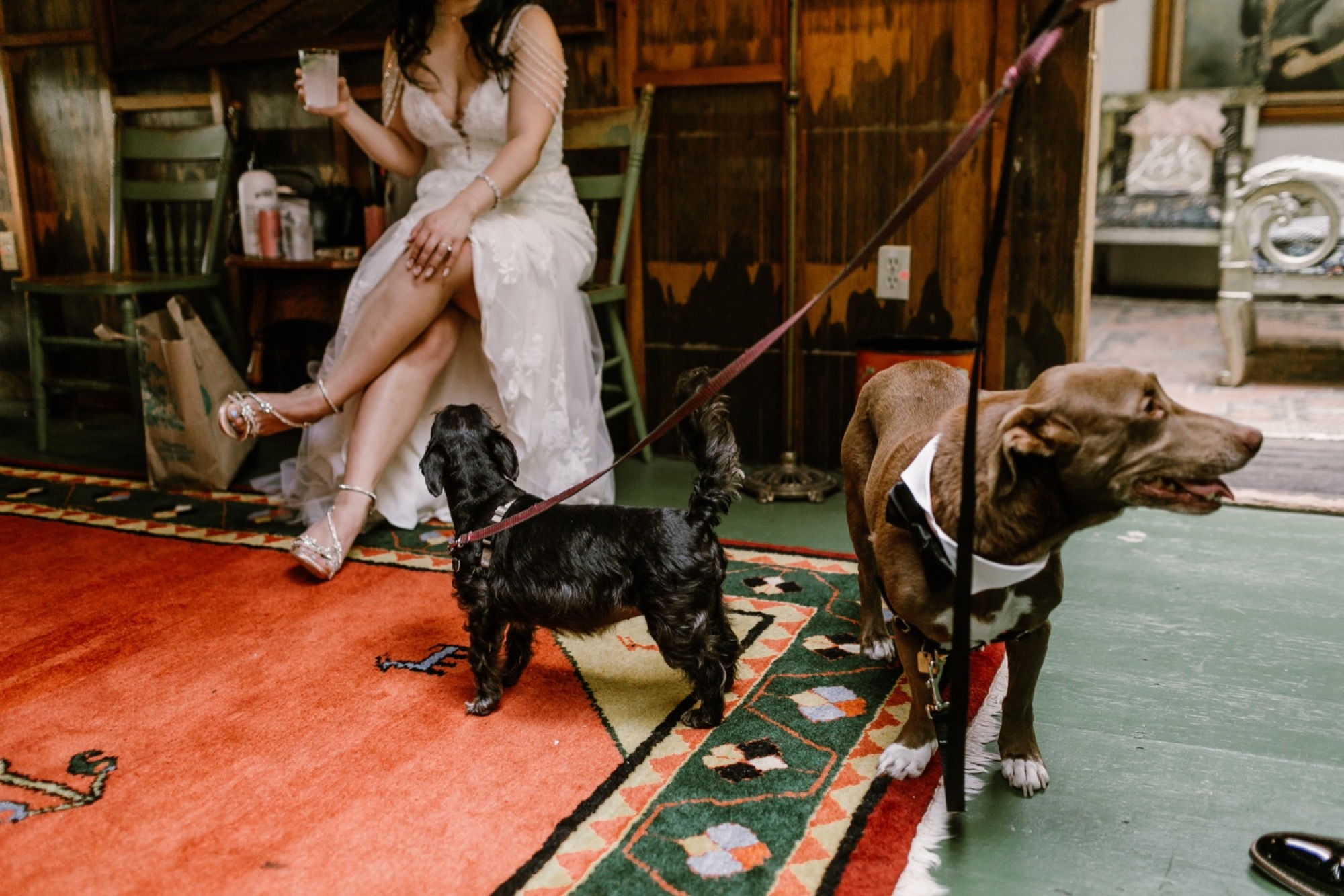 22_Brittany and Chance Wedding-242_dogs_wedding_on_day.jpg