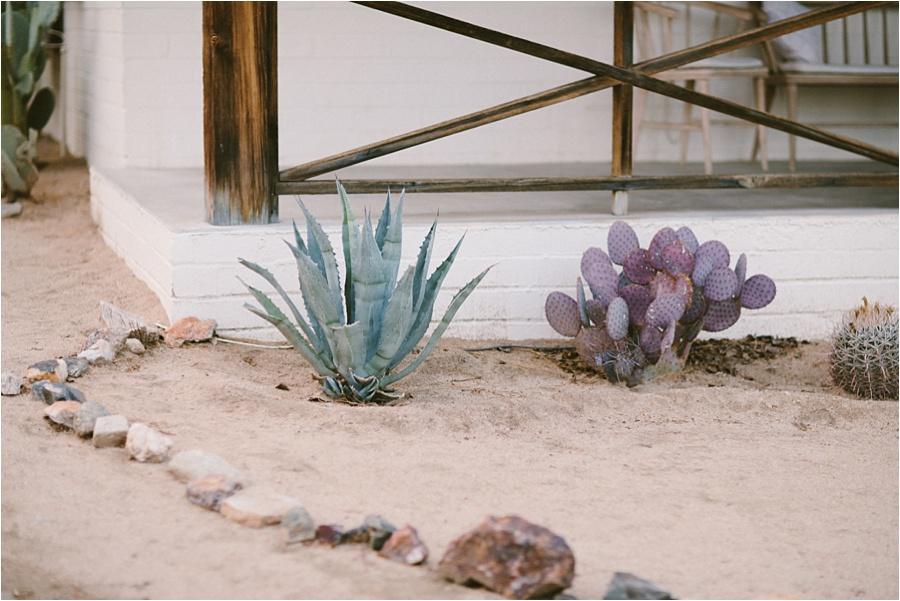 Palm Springs + Joshua Tree